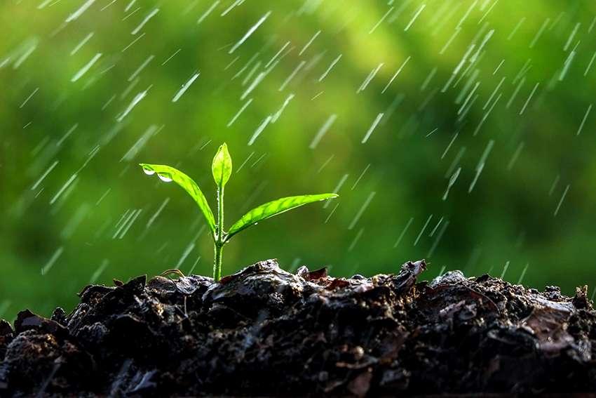 Дождеватель: виды разбрызгивателей