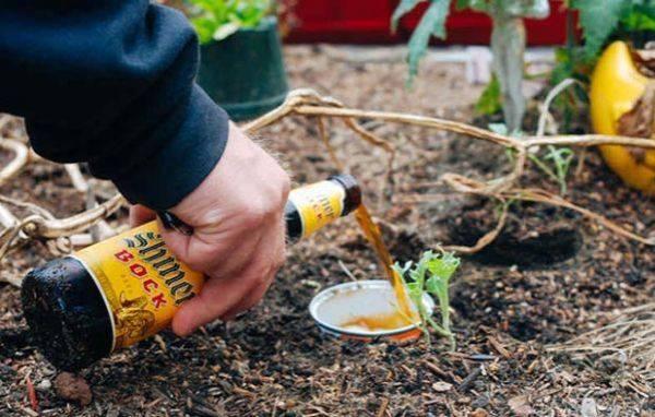 Как избавиться от слизней на огороде? народные средства борьбы со слизнями