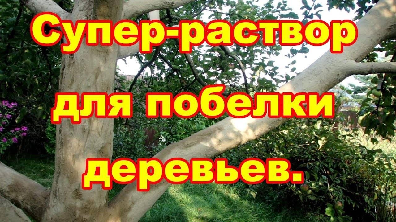 Побелка деревьев весной: когда, зачем и чем белить плодовые деревья