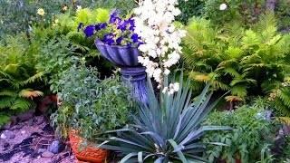 Юкка нитчатая садовая мужественно выдерживает испытания
