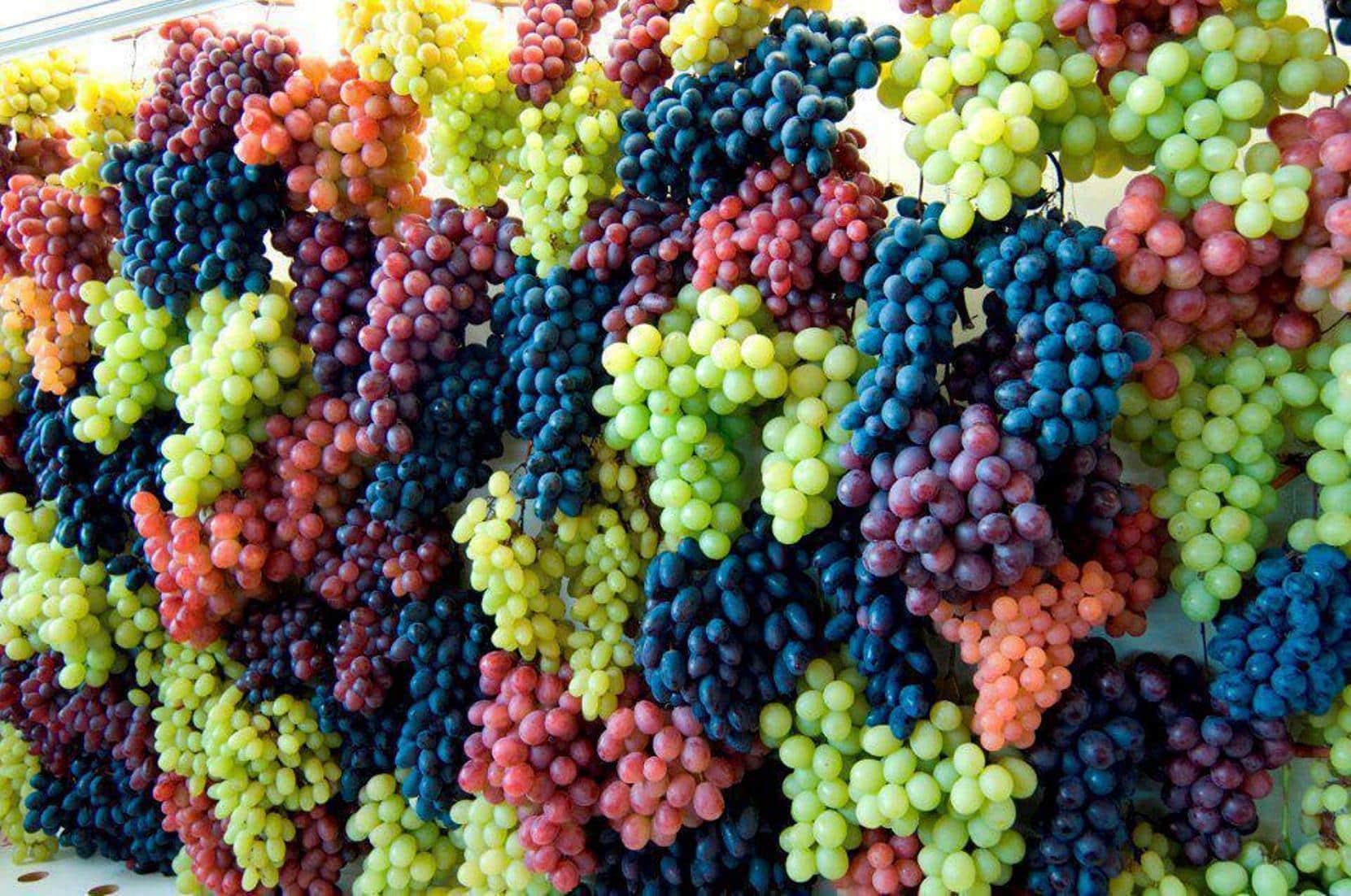 Уход за виноградом в июне