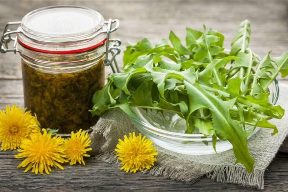 Что можно приготовить из одуванчиков – рецепты для укрепления здоровья и не только