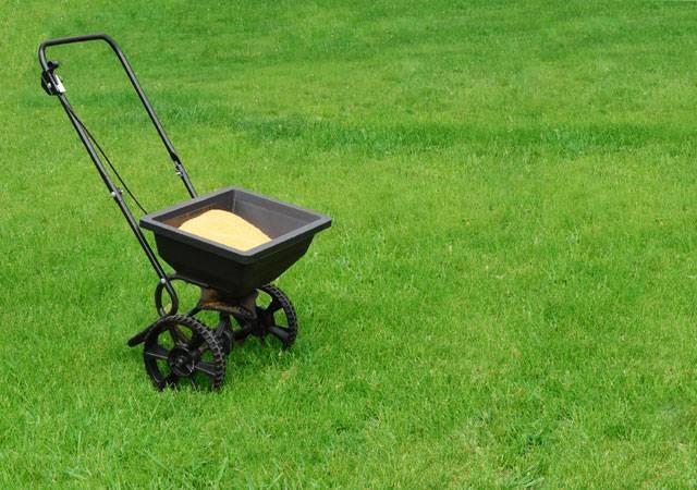 Как удобрять газон летом: необходимые подкормки и их применение