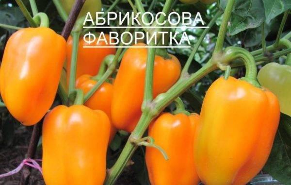Лучшие сорта сладкого перца для сибири на 2020 год: для теплиц и открытого грунта, cибиpcкoй ceлeкции