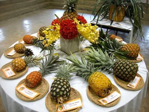 А вы знаете какие виды и сорта ананасов существуют в природе?