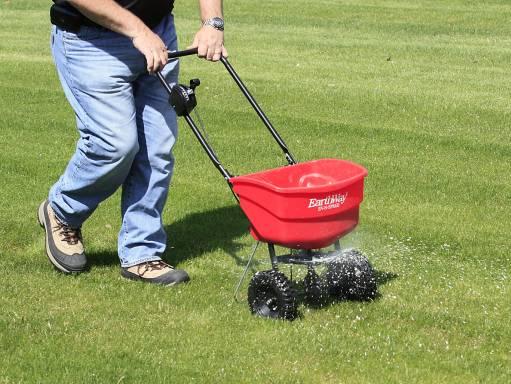 Как правильно сажать газон весной: сроки и технология посадки