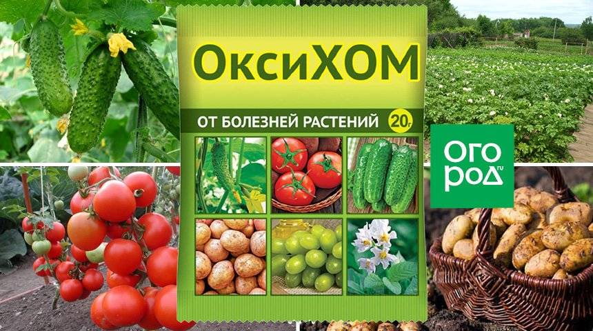Препарат хом — инструкция по применению для растений, видео