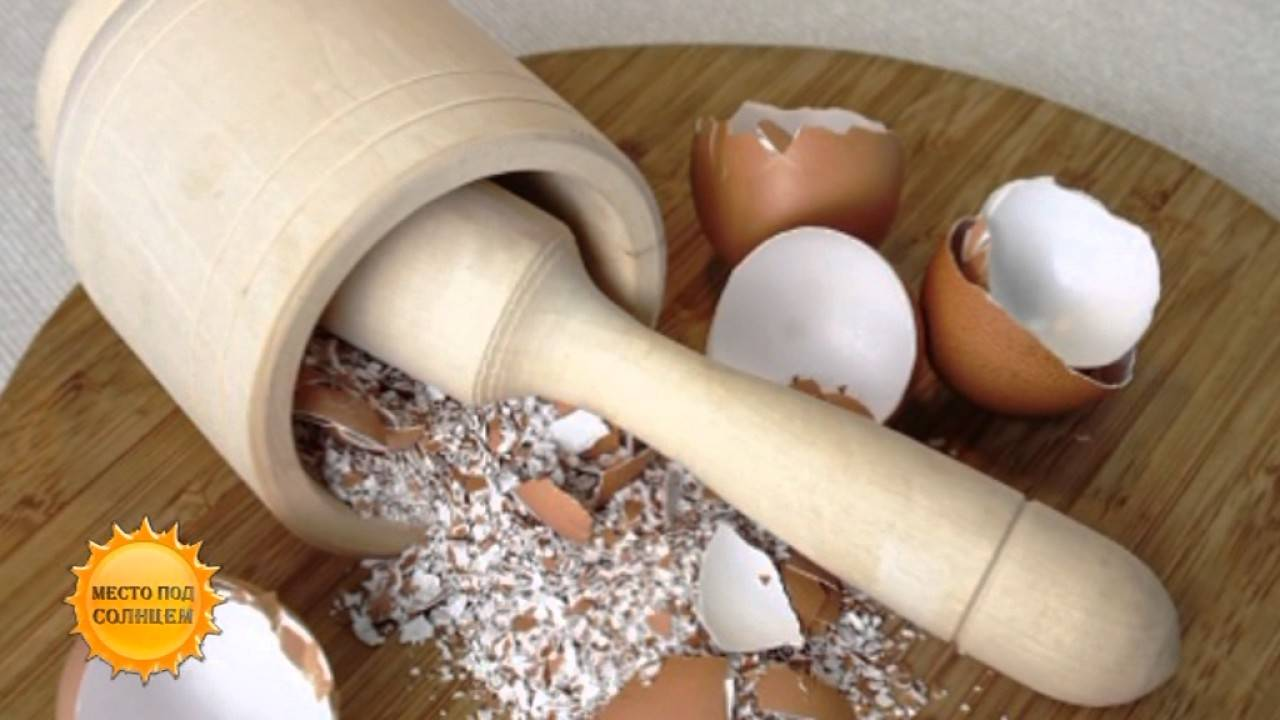 Полезные свойства яичной скорлупы для садовых культур
