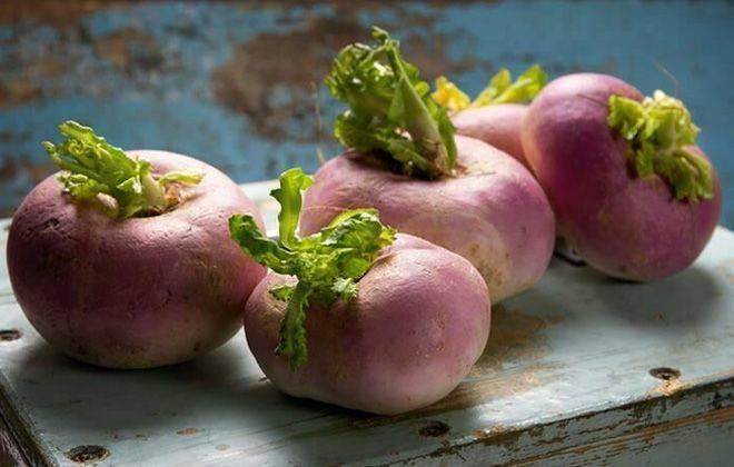 Выращивание и уход за кормовой свеклой — простая агротехника, но с некоторыми нюансами