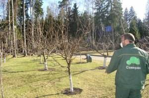 Для чего опрыскивают осенью мочевиной, железным и медным купоросом растения в саду