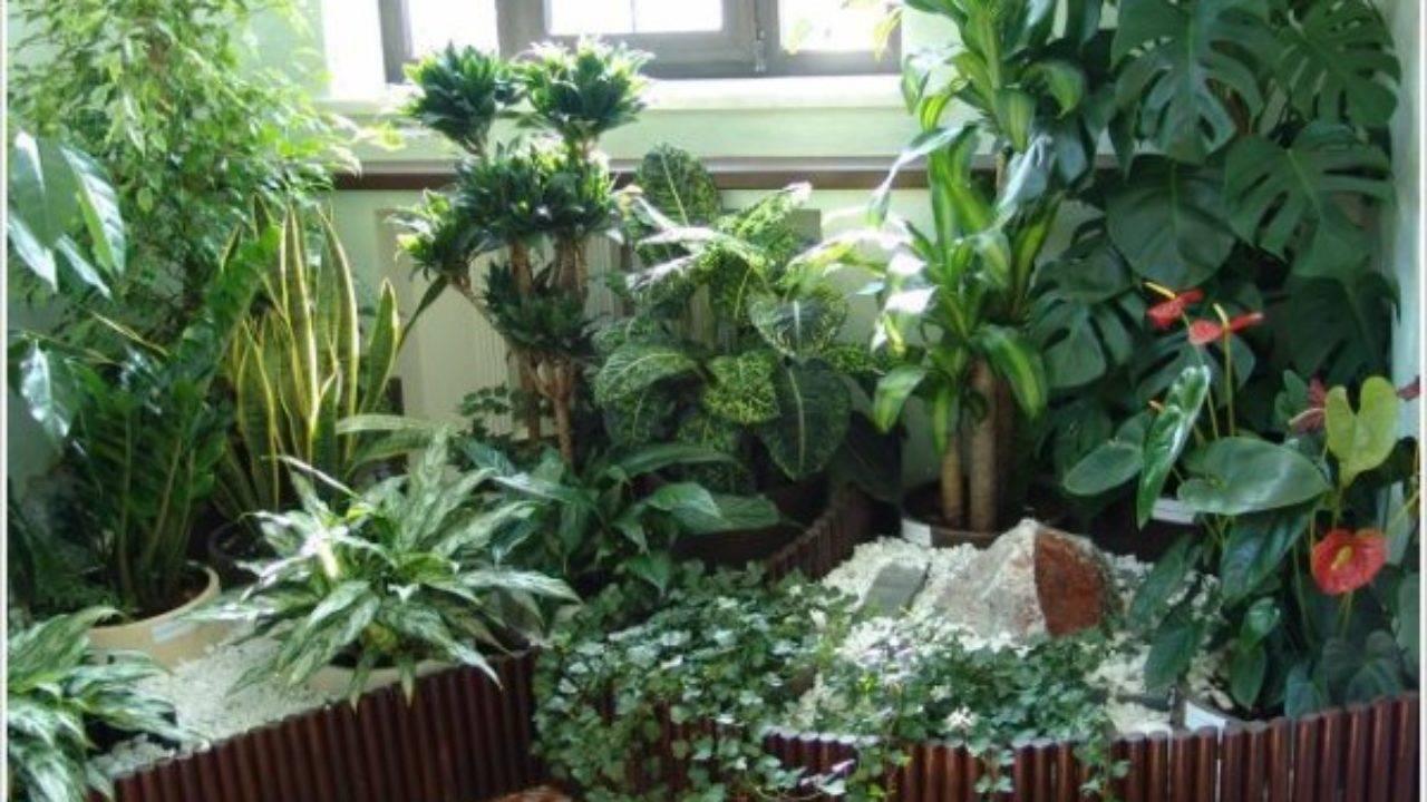 Зимний сад в частном доме своими руками