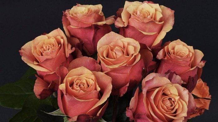 Как размножить розу из букета в домашних условиях: правила черенкования и укоренения черенков