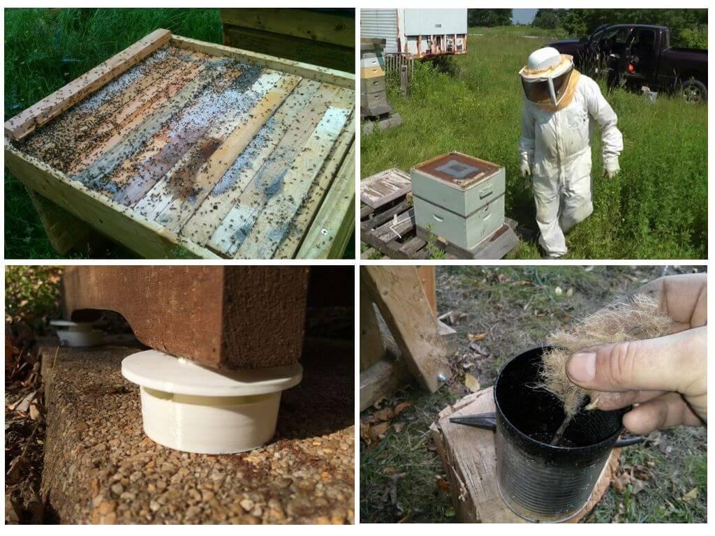 Избавляемся от муравьев в улье на пасеке. описание с фото и видео