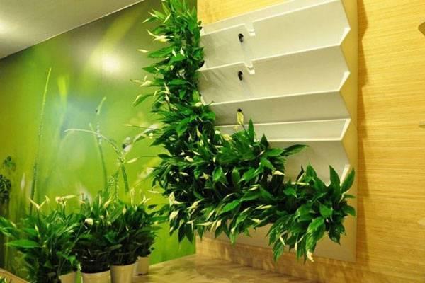 Как сделать стену из живых цветов. привет из далекого прошлого — оригинальная живая стена. вертикальное озеленение — фото