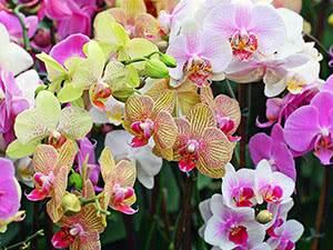 Как избежать болезней орхидей? советы по лечению и профилактике