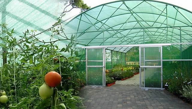 Какую затеняющую сетку выбрать для теплиц с огурцами и томатами