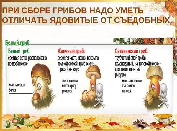 Календарь грибов