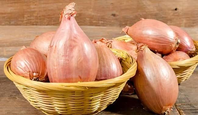 Средство от 100 болезней: применение луковой шелухи, ее польза и вред для организма, лучшие рецепты для здоровья