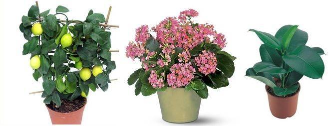 12 лучших растений для детской комнаты