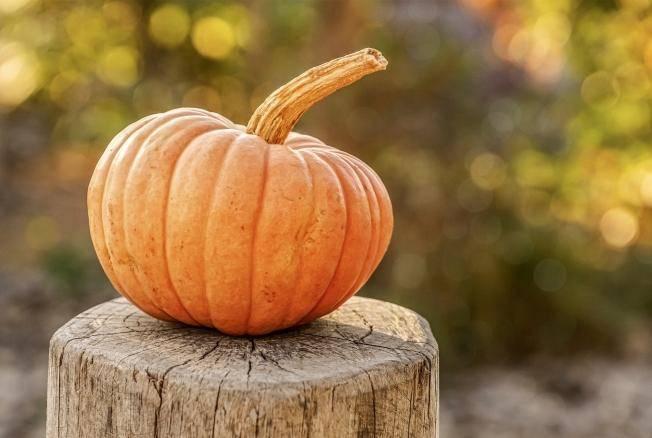 Декоративная тыква для поделок и декора на хеллоуин: как правильно высушить?