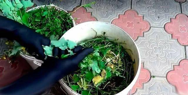 Травяной настой для подкормки растений — готовим правильно