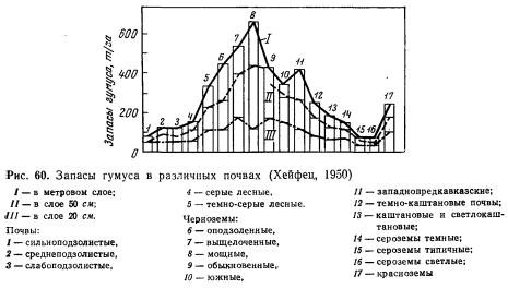 Ведущий фактор плодородия разных типов почвы — гумус