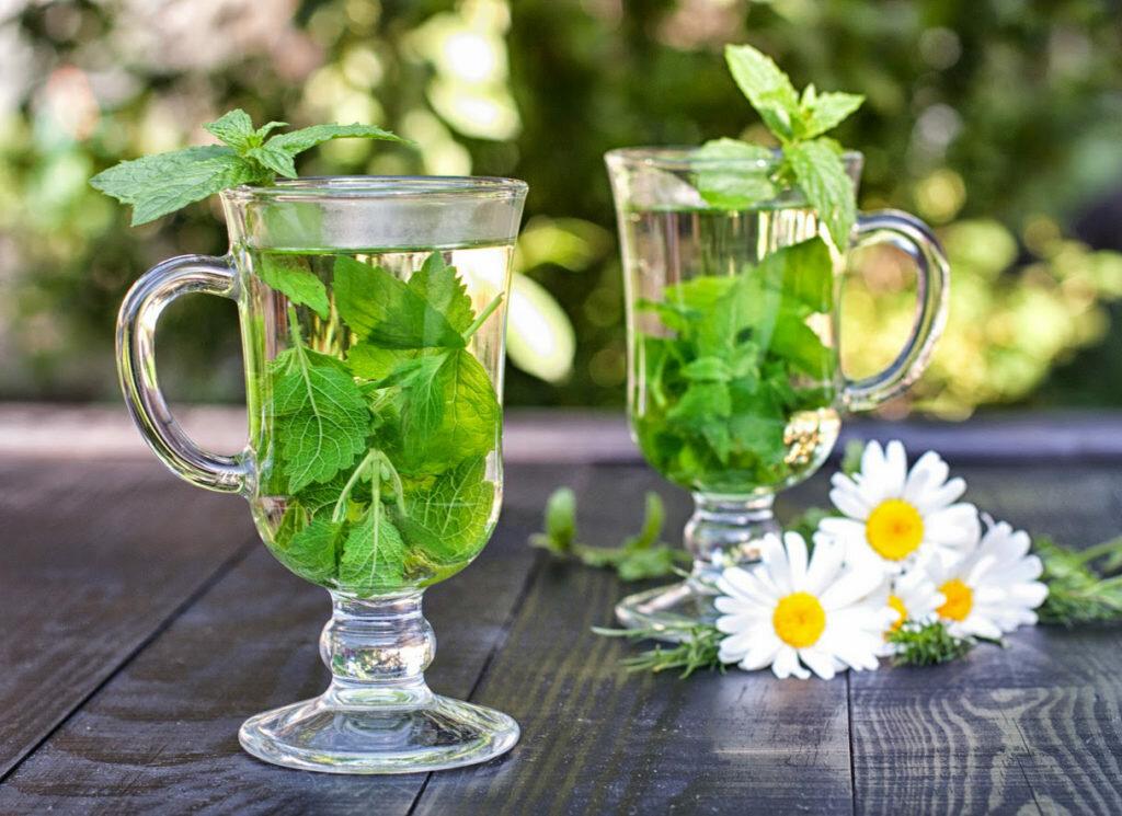 Что за трава мелисса: польза и вред, способы применения и рецепты, выращивание