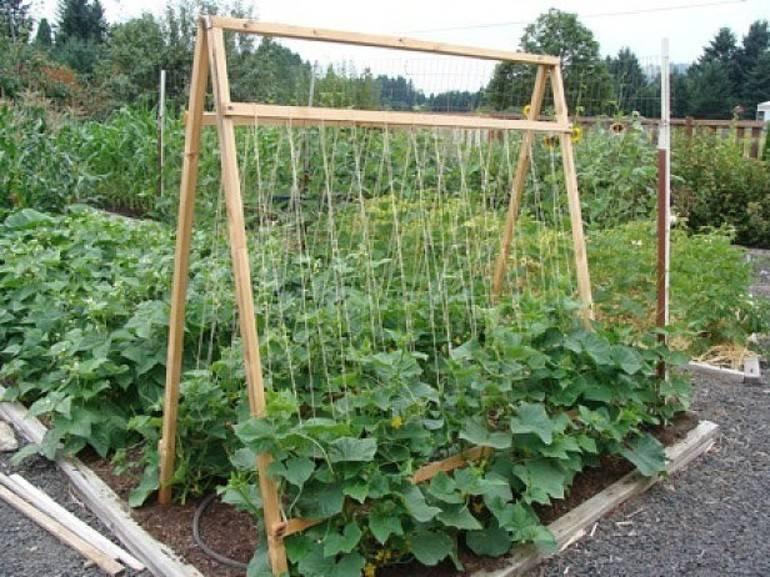 Опоры для вьющихся растений и цветов
