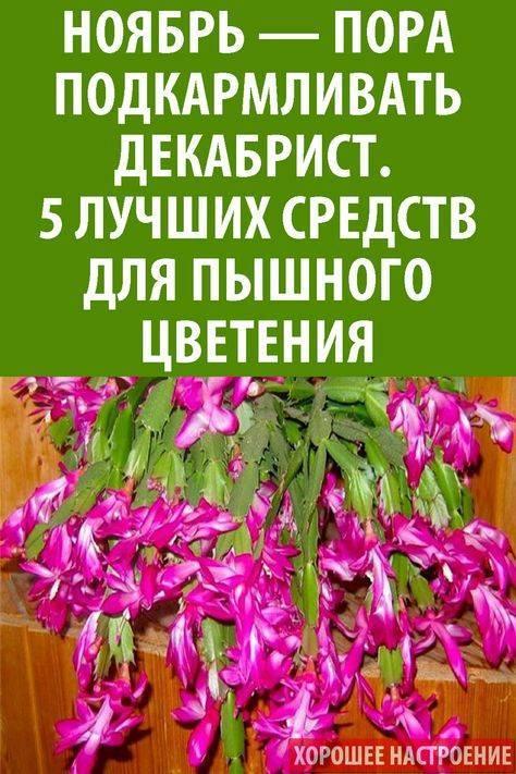 """Что комнатные растения могут """"рассказать"""" о своем хозяине и как влияют на его характер"""