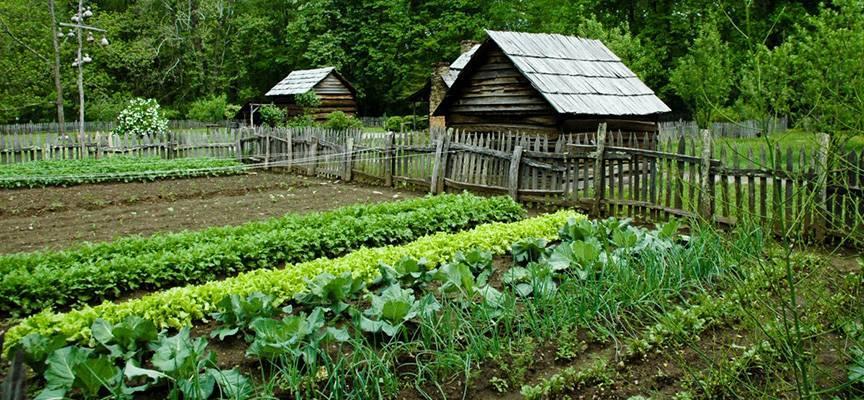 Основы огородничества по миттлайдеру