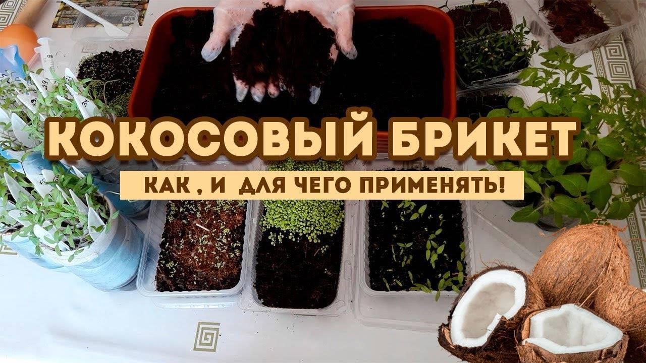 Как получить большой урожай баклажанов: способы выращивания рассады, посадка в грунт и в теплицу