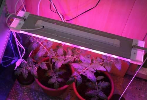 Правильное освещение для растений и как его обеспечить?