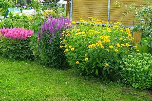 Иберис: выращивание из семян, посадка и уход