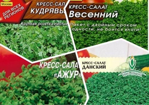 Растение салат: выращивание из семян в домашних условиях и в открытом грунте