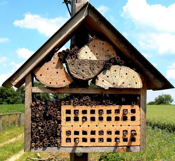 Где вьют гнезда птицы, и как привлечь их на свой участок