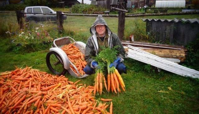 Какими народными средствами можно подкормить морковь и как это сделать? чем пользоваться не рекомендуется?