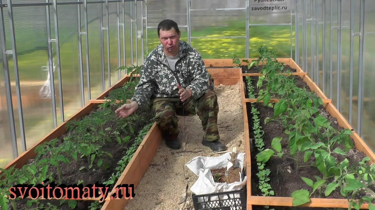 Как вырастить крепкую и хорошую рассаду томатов