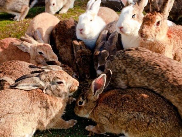 Кролики на даче: с чего начинать