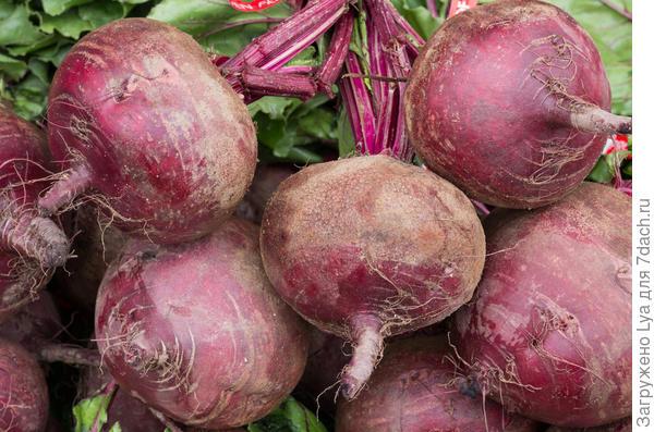 Лучшие способы, как хранить морковь зимой и правила выкапывания и подготовки овоща