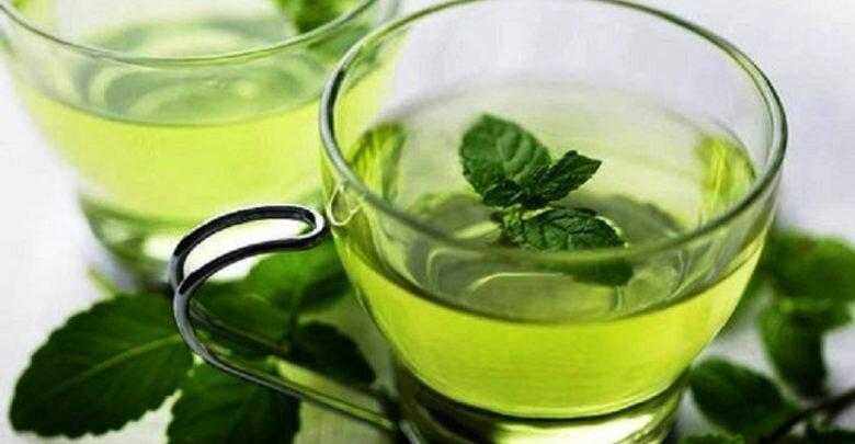 Польза и вред чая с мелиссой для организма