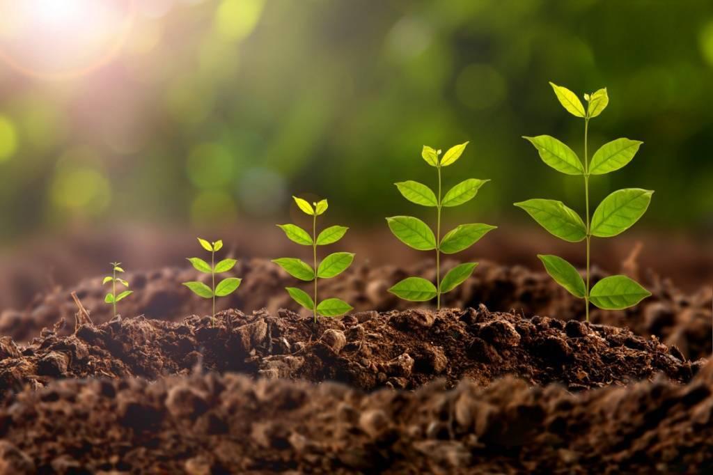 Вымпел стимулятор роста. особенности использования регулятора роста растений «вымпел»