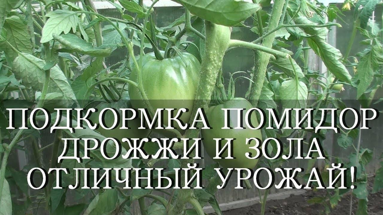 Секреты подкормки рассады томатов и перцев дрожжами