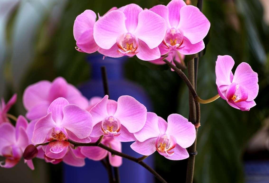 Советы, как восстановить тургор листьев у орхидеи фаленопсис