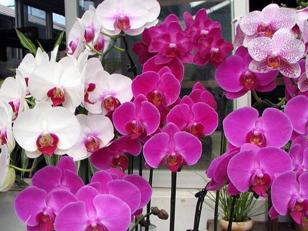 Интересный вопрос: когда подкармливать орхидеи в домашних условиях?