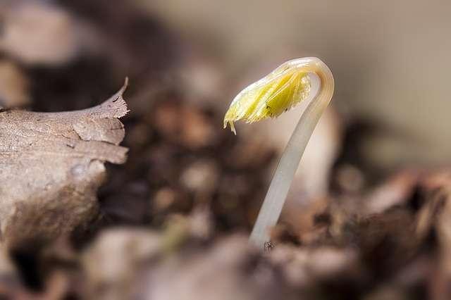 Что посадить в январе на рассаду из овощей и цветов