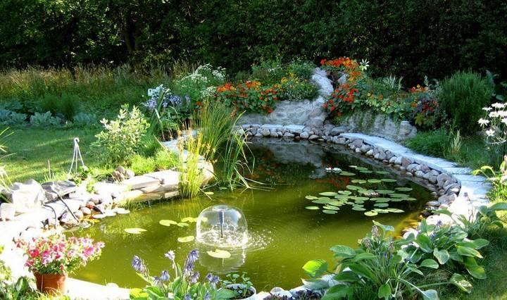 Растения водоема: названия, описания и фото