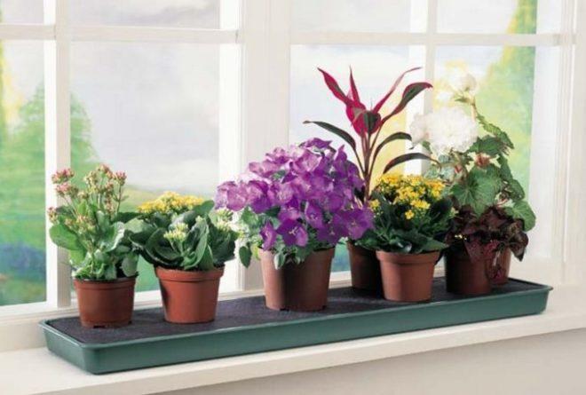 Рейтинг лучших растений и цветов для спальни