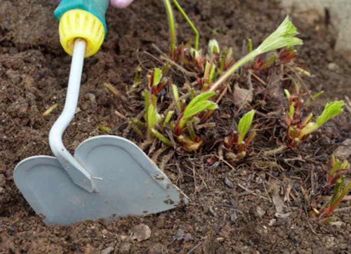 Залог прекрасного урожая своевременная подкормка клубники весной!