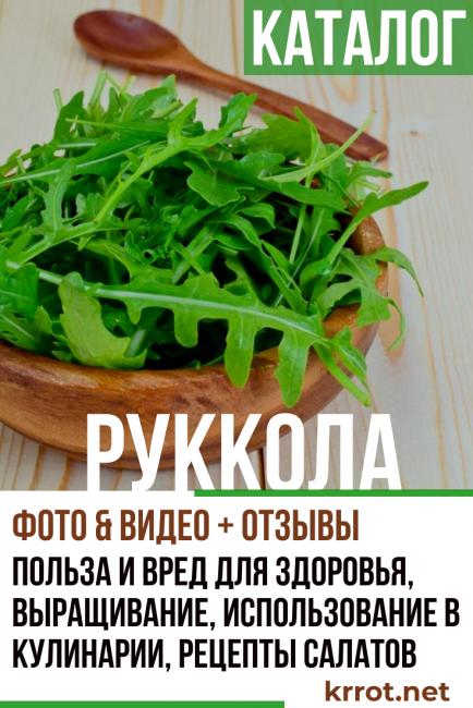 Важные причины посадить шпинат на участке – все о пользе шпината для здоровья