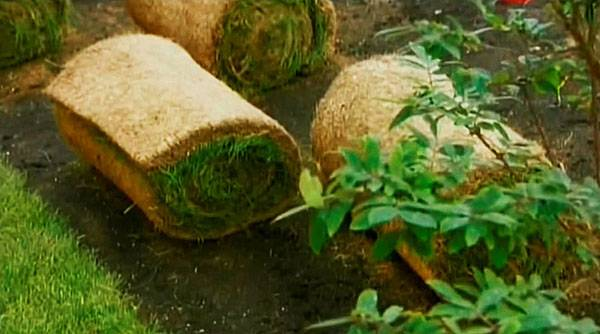 Как укладывать рулонный газон: технология и описание процесса пошагово